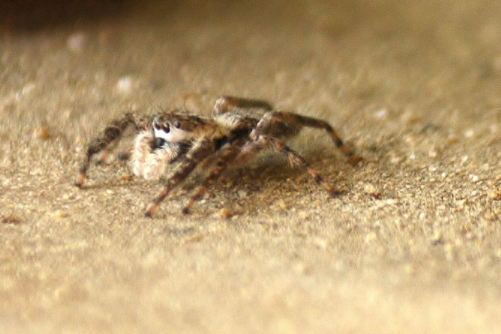 unidentified spider (15)