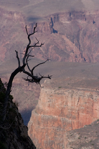 Tim Burton's Grand Canyon