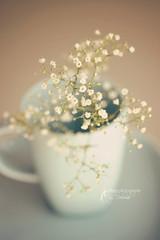 Softness (dhmig) Tags: stilllife flower closeup nikon bokeh nikond50 mug gypsophila 50mmf28 dhmig dhmigphotography