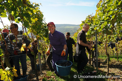 German Wine Harvest
