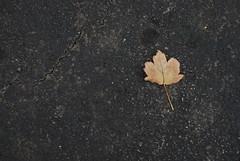 Paper fall (3bdol in USA) Tags: fall paper photography 50mm nikon va sterling nikkor 2010  abdullah   d80 18135mm nikond80  nikkor18135mm  alshehri abdullahalshehri