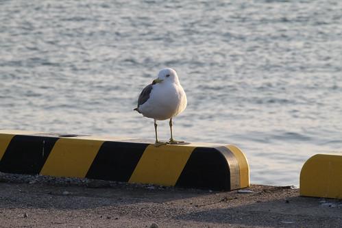港にいた鳥