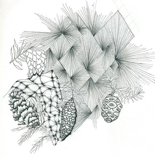 ZT11 pine cones