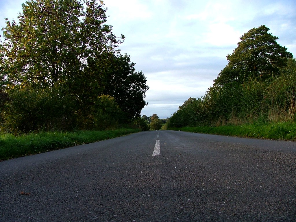 Open letter to the driver who struck a doe on this stretch of road, 1st October 2010, 6 p.m.