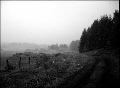 dana hilliot - la première averse de neige (le 17 octobre)