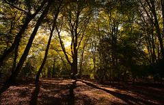 Shepherd's Gutter, New Forest (trekker308) Tags: nikon newforest bramshaw d300s 1685nikkor shepherdsgutter