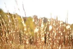 Autumn sunshine (Annnnie :)) Tags: autumn trees fall grass golden nikon bright bokeh d5000