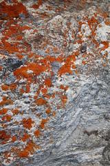 kangerlussuaq - red moss (Vida Morkunas (seawallrunner)) Tags: travel cruise greenland hurtigruten cwall kangerlussuaq westgreenland july2010 vestgronland westerngreenland ataleoftwoicelands returntoeurope