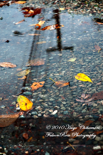 11-01-2010_leaves_in_puddle_wm-1
