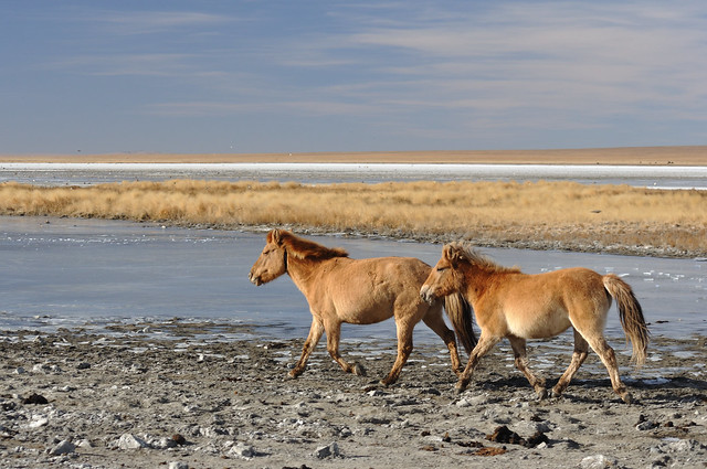 Horses at salt lake