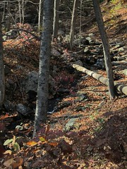 Mountainside Stream Photo