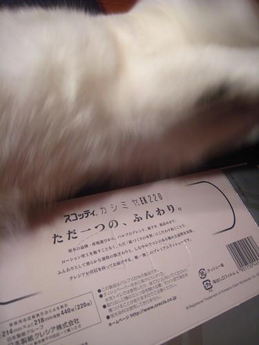 IMG 6529
