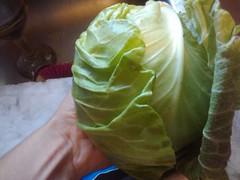 round head cabbage