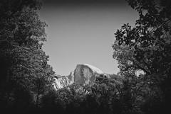 Through the Trees (Bruce Bordelon) Tags: california park trees white mountain black mountains nature monochrome silver nikon conversion national yosemite dome half granite pro nikkor f28 d80 efex 1424mm
