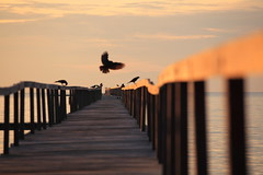 Crows @play (ChR!s H@rR!0t) Tags: sea sun penang telok tempoyak
