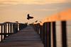 Crows @play (ChR!s H@rR!0t) Tags: sea sun penang telok tempoyak