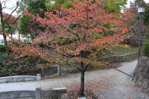 色づいた木々のなかの散歩 A promenade