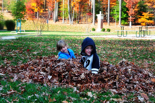 in the leaves 7