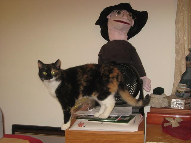 Amy 2010-11-19