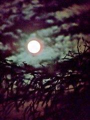 And The Moon Sees Us (chicbee04) Tags: pink moon english clouds freedom israel poem victorian halo it short midnight poet what jewish ba hebrew layla atnight happened the inthenight  at of williamernesthenley isaiah211112 ithappenedatmidnight wartchmanwhatofthenight wartchman nightinvictus 18491903