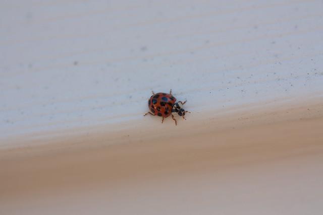 Lady Bug SOOC