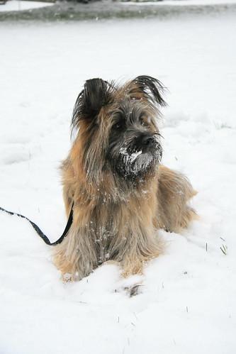 Hudson in the snow. Nov 25th, 2010
