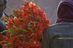 Fresh (kalsnchats) Tags: street new morning flowers sunlight india colors backlight photography place market fresh greens oranges shoulders mandi selling bustle carry wholesale stalks bouquets crowded hustle buying connaught florists dealers kalpana galdiolus phool dlehi chatterjee wholsalers kalsnchts