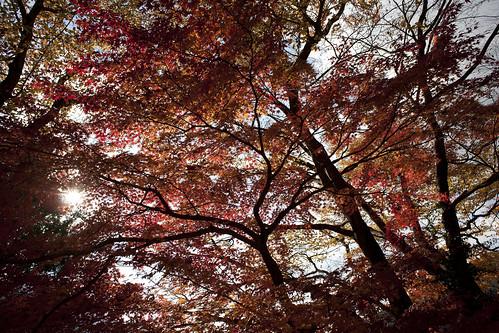 Doshi Nov 2010