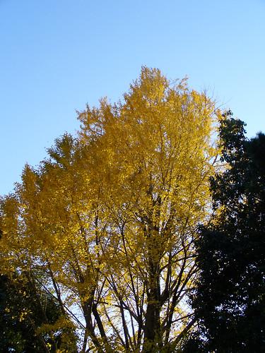 Paddock Café :: 鮮やかな黄色に色づいて...