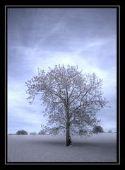 lone tree (Ellis Photography2010) Tags: top20blue canon550d