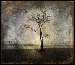 Variations on Lonely (Beaches Marley) Tags: tree textures lonetree cherrybeach artistictreasurechest magicunicornverybest theacademytreealley memoriesgroup