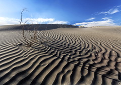 Mesquite Sands (brian_stoddart) Tags: landscapes deathvalley sand dunes tree ripples sky america shadow light clouds