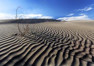 Mesquite Sands