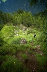Bivio... (bushpig [goph51]) Tags: verde green summit dolomiti cima triade ilovegreen goph51 gimmy focobon paledisanmartino dolomia cimacampido3001mt pleasedonatewwwgoph51com