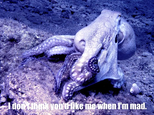 angry blue octopus