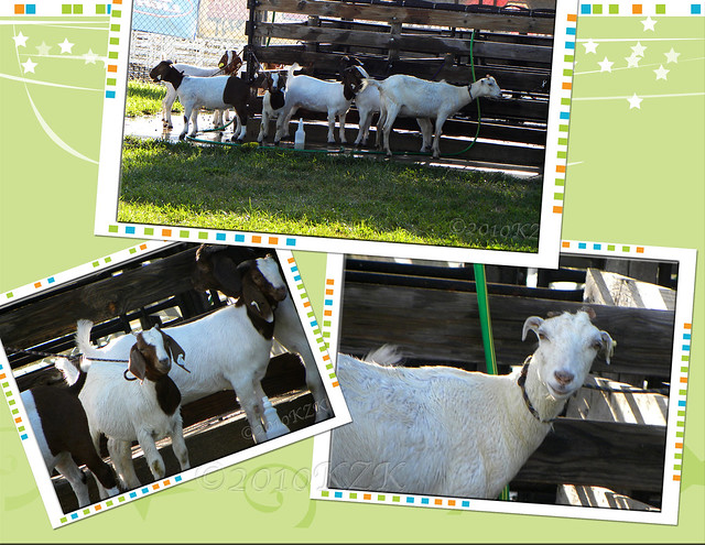 CollageRiCoGoats