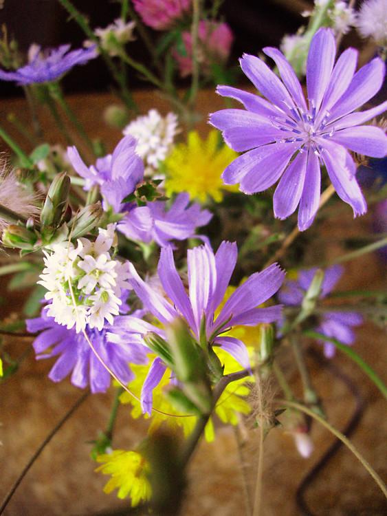 flower1-e