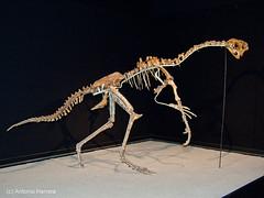 Ovirraptor