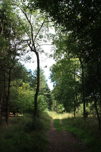 West Wycombe woods
