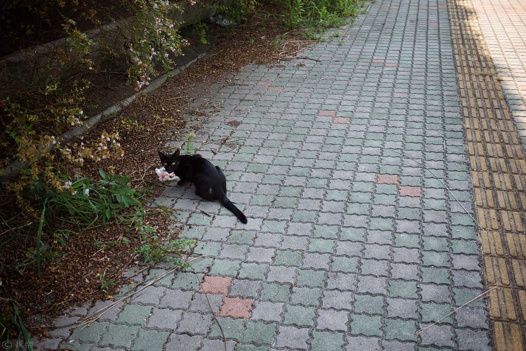 cat on the street #3