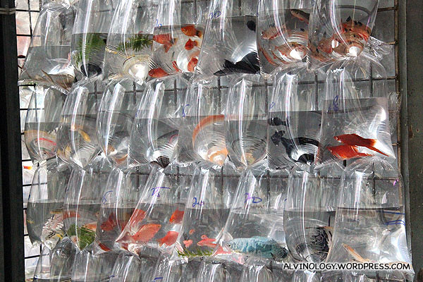 Multi-coloured bags of fishes