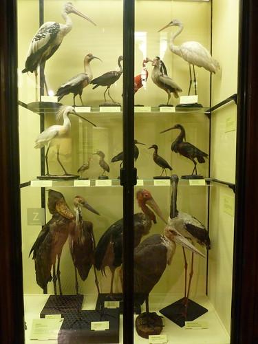 Storky