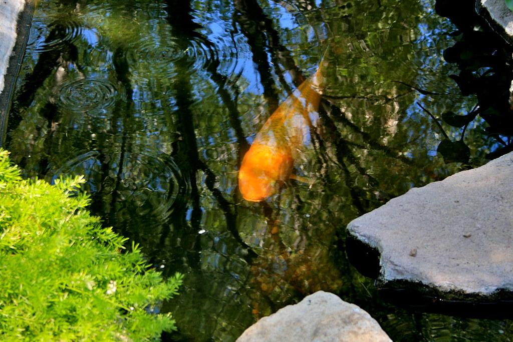 dd•*¦*•dd.. Rosh HaShanna Fish Special.. dd•*¦*•dd