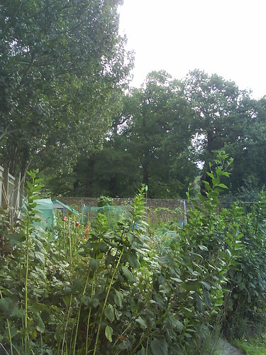 view of Richmond Park from allotments