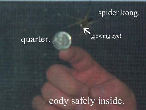 spider kong.