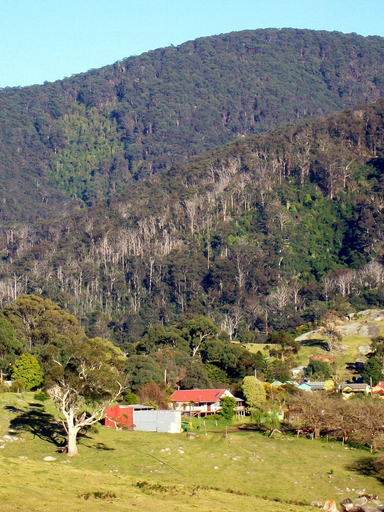 Gulaga Mountain and a Patch of Rainforest