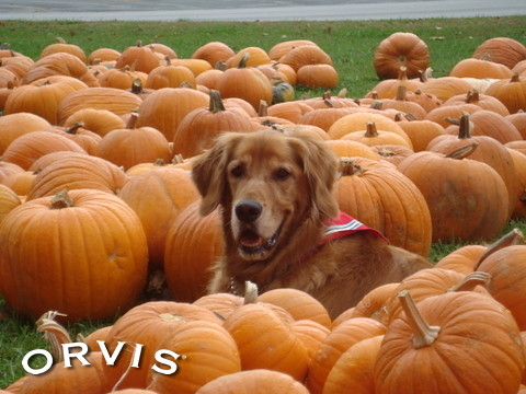 Orvis Cover Dog Contest - Rusty