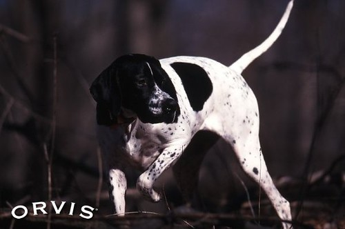 Orvis Dog Book Communication Preferences By pressing the Request Printed Catalogue button you give consent to Orvis Dog Book (and their Data Processors for the specific purpose of delivering your literature) to send you their Catalogue/5.