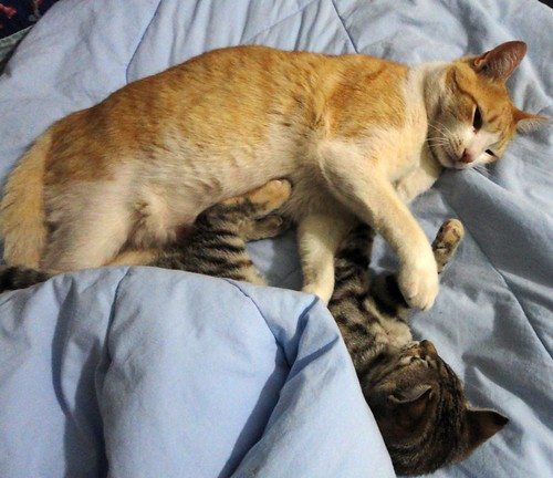 Dividindo a mesma cama
