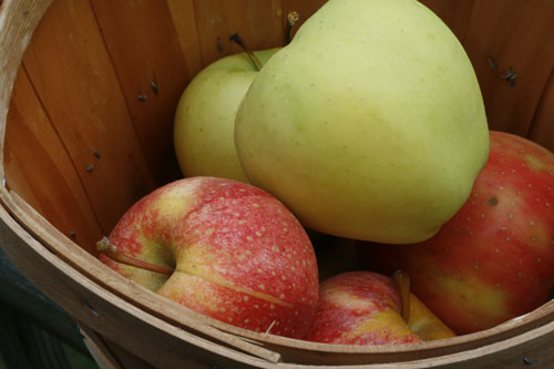CSA Day: Cinnamon Applesauce and Other Fun Ideas